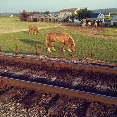 Train Tracks and Horses in Lancaster PA County