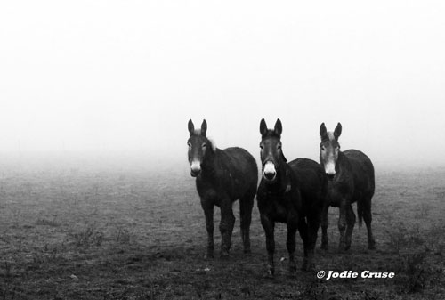 Jodie Cruse Lancaste Based Photographer 1 Do you plan out the times and places you shoot ahead of time?