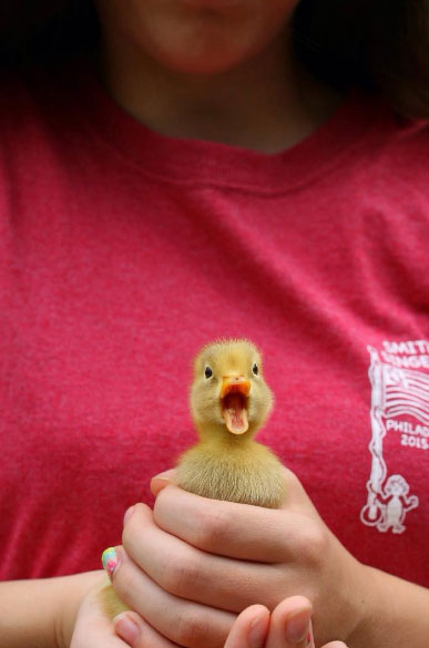 Lancaster Photographer Baby Duck Which do you enjoy more for sharing your photos – Facebook or Instagram?