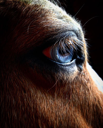 Photo By Jennifer Strouse Horse Did it change your editing process?
