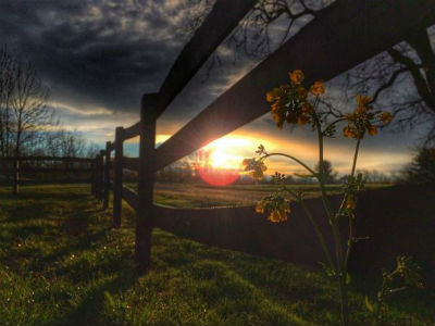 Sunset Through A Fence Deiter What can we expect from Tyler Deiter in the coming months?