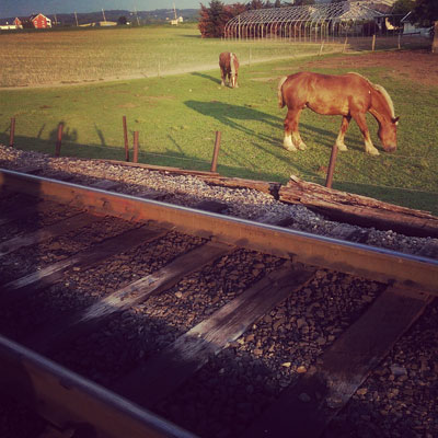 Train Tracks and Horses in Lancaster PA